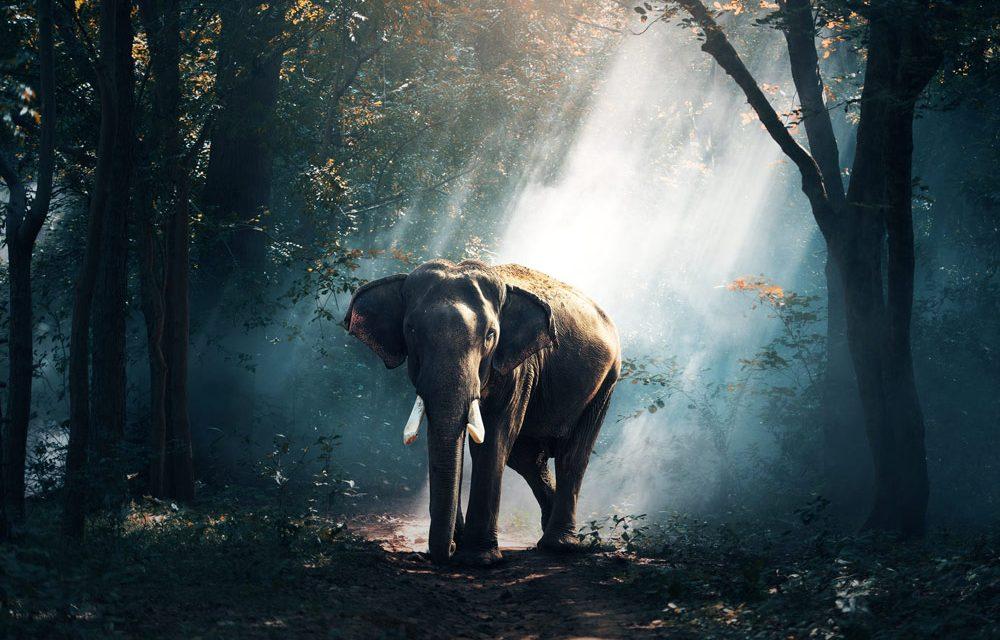 Le tourisme tanzanien s'apprête à protéger la faune sauvage grâce à la formation paramilitaire