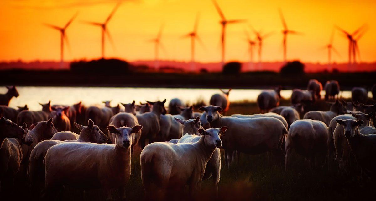 Agriculture biologique : où en est on ?