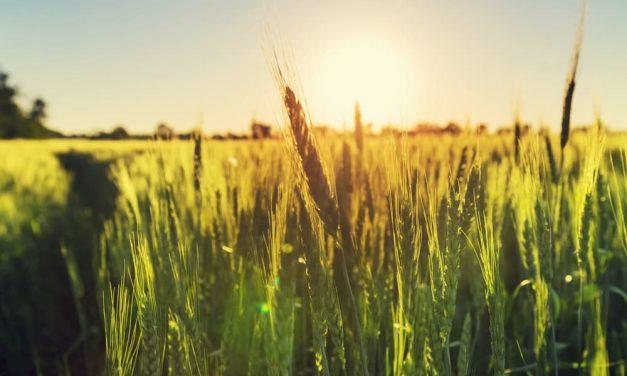 8 conseils pour réduire l'empreinte écologique de notre alimentation