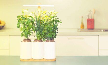 Potager d'intérieur connecté, écologique ? Lequel choisir ?