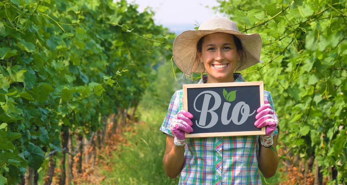 Tout savoir sur le vin bio